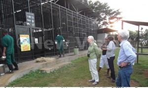 Ngamba Island Schimpansen-Auffangsstation