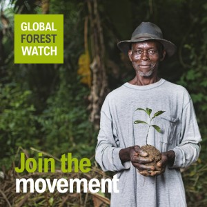 Global Forest Watch Mitmachen