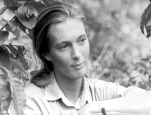 Young reseacher Jane Goodall at  Gombe.