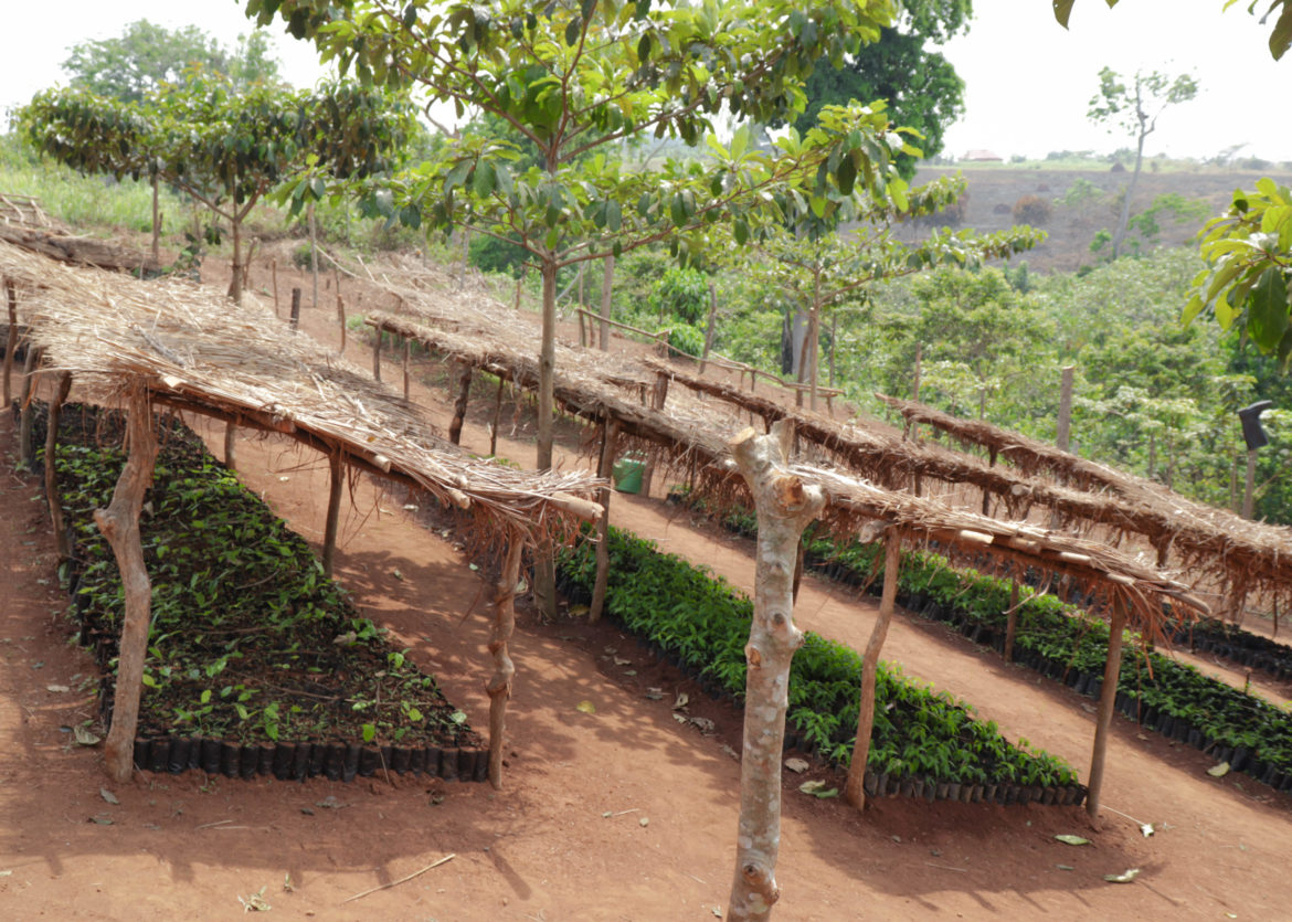 Community Tree Nursery